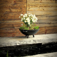 Flowers in a rustic pot fine art photography, white green yellow black brown