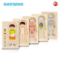Children Educational Toys Wooden Human Body Puzzle Boys Girls Body Structure Wooden Children Puzzles Kids Toys Educational