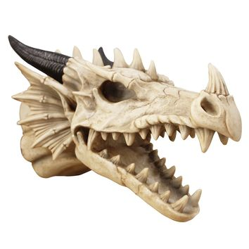Large Natural Dragon Skull