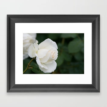 Tineke Rose Framed Art Print by Glenn Franco Simmons