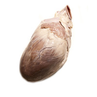 Pig Heart in a Jar