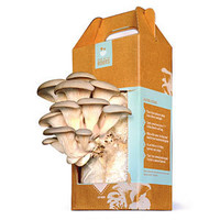 At Home Mushroom Growing Kit