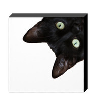 Cat Photo Canvas Kitten Canvas Photo Nature and Wildlife Photo Canvas 8x8