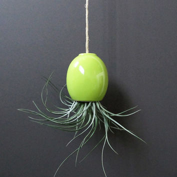 HALF OFF SALE - small green hanging airplant pod planter (tm)