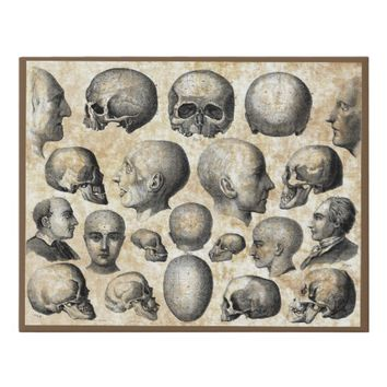 Human Skulls Anatomy Vintage Science Art Faux Canvas Print
