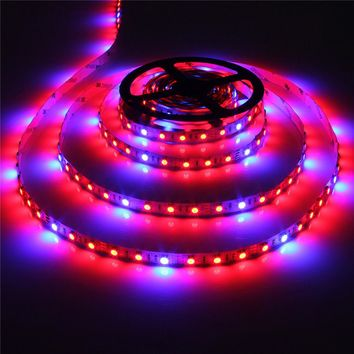 LED Plant Grow Lights 5050 LED Strip DC12V Red Blue 3:1 4:1 5:1 for Greenhouse Hydroponic Plant Growing 5m lot 60leds m