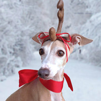 Max the Grinch Dog head antler for Christmas pets, dog or cat!