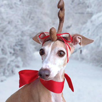 Max the Grinch Dog head antler for Christmas pets dog or cat! & Max the Grinch Dog head antler for from Olipra on Etsy