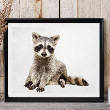 Raccoon Print, Woodland Animal Decor, Baby Raccoon Print, Nursery Wall Art, Animal Photo, Kids Room Decor, Printable Art, Large poster