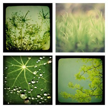 SALE Lush Set of Four 5x5 Prints in Green by WoodsEdge on Etsy