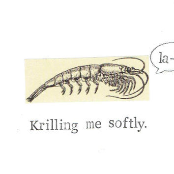 Krilling Me Softly Card | Funny Prawn Nerdy Birthday Marine Biology Humor Weird Vintage Science Pun Nature Ocean Natural History