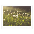 "Libertad Leal ""As You Wish"" Dandelions Fine Art Gallery Print"