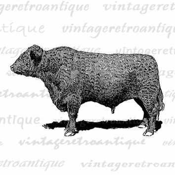 Digital Image Galloway Bull Cow Graphic Printable Download Vintage Clip Art for Transfers Making Prints etc HQ 300dpi No.3552
