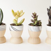Mini Planters Set Of 4 Modern Decor Father's Day Black And White