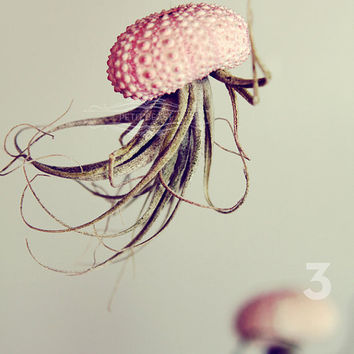Jellyfish Air Plant // Sea Urchin Wedding Favor Decor Gift Mini Kit DIY tiny cute exotic house plant shell hanging art