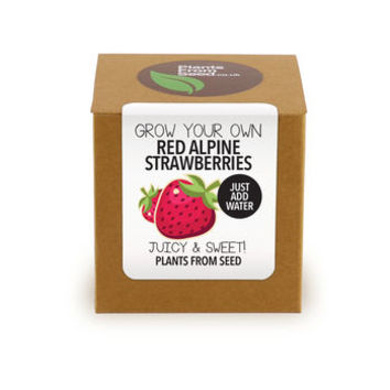 Grow Your Own Red Alpine Strawberries Plant Kit