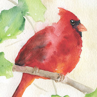 Cardinal Holly Watercolor Painting Fine Art Print Giclee 8 x 10