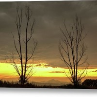 Rocky Mountains Horizon Through The Trees Metal Print