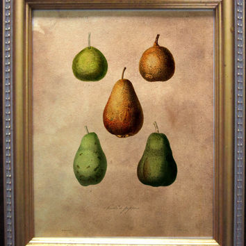 Vintage Style Food Art Print- Fruit Art Print- Pears on Tea Stained Paper