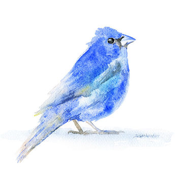 Indigo Bunting Watercolor