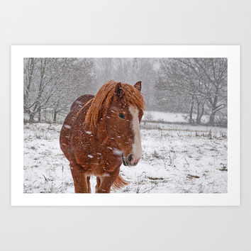 Horse in the snow Art Print by Pirmin Nohr