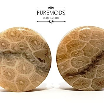 "Petoskey Stone Plugs 5/8"" (16mm) - 1"" (25mm)"