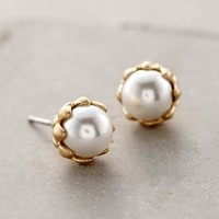 Pearl Bud Posts by Anthropologie Pearl All Earrings