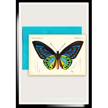 Butterfly No. 7 Folded Greeting Card // Min. Case Pack of 6