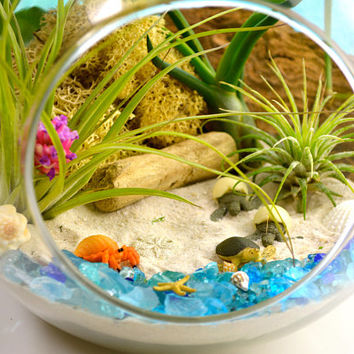 "Beach Terrarium Kit ~ 7"" Air Plant Terrarium Kit ~ Sea Turtles and Hermit Crab ~ Coastal Living Beach House Decor ~ Gift Ideas"