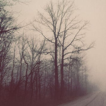 Ethereal Nature Photography, Winter Forest, Dreamy Color, Autumn, Fog, Bare Branches, Trees, Foggy Road Landscape Photograph