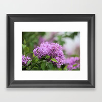 Lilac Bouquets Framed Art Print by Theresa Campbell D'August Art