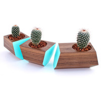 3 Pc. Solid Walnut Wood Planters - Turquoise