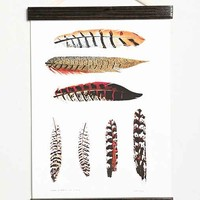 Curious Prints Feathers Hanging Dowel Print - Ivory One