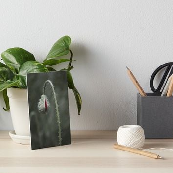 'Botanical Still-Life Photography Poppy Unveiled' Art Board by by-jwp