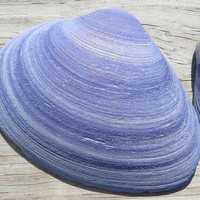 Purple Clam Shells Hand Dyed Beach Cottage Decor Two Dozen