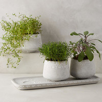 Netara Herb Planter Set