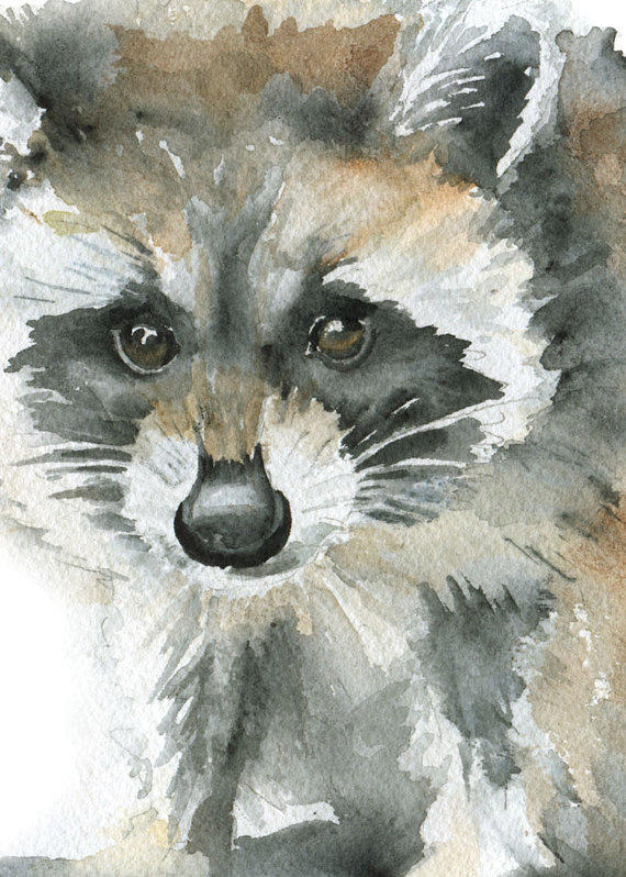 Raccoon Watercolor Painting Print Giclee From Susan Windsor