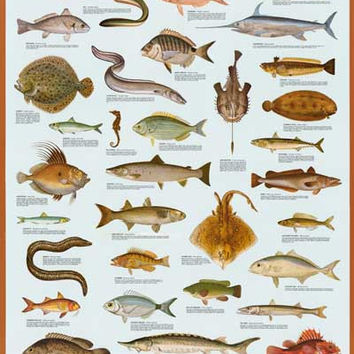 Fish of the Sea Poster 27x39