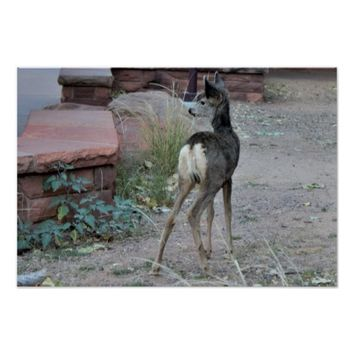 Mule Deer Fawn Zion National Park Poster