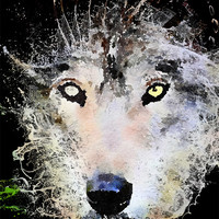 Wolf Wall art Splash digital download unique Grey Wolf nature print, Instant Download, Wolf picture, Wolf face, Wildlife art print