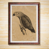 Parrot poster Antique decor Bird print