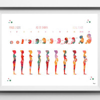 Pregnancy stages Watercolor Print medical art fetal developement poster fetus gestational age print ginecology anatomy art print obstetrics