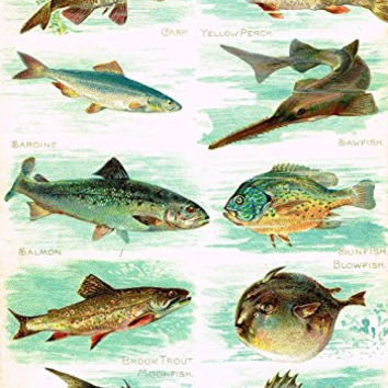 "Miles's Natural History - ""Sawfish, Trout, Bass, Sunfish"" - Chromolithograph - 1895"