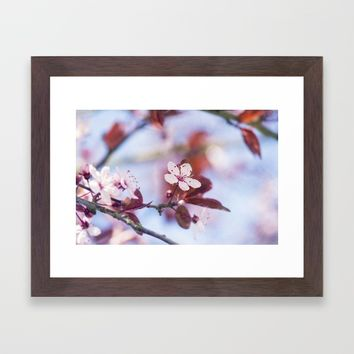 Cherry Tree Framed Art Print by Kristopher Winter