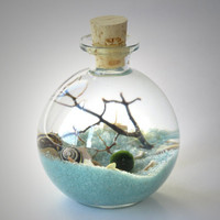Marimo Bottle Garden Terrarium by Midnight Blossom - Underwater Terrarium with living japanese moss ball, sand, pebbles and black sea fan.