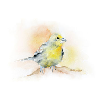 Goldfinch Watercolor