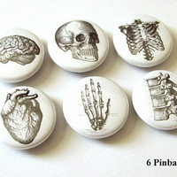 Anatomy 1 inch PINBACKS PINS BADGES rib cage vertebrae hand brain skull anatomical heart