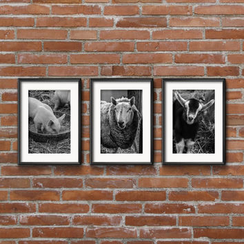 Set of Three Black and White Farm Animal Prints- 8x10 - 5x7 - 4x6 - Barn Artwork