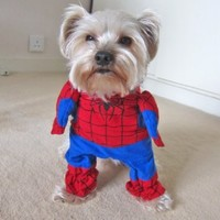 Alfie Pet by Petoga Couture - Superhero Costume Spiderman - Size: S