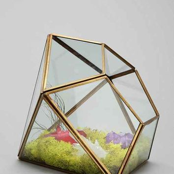Magical Thinking Geo Terrarium